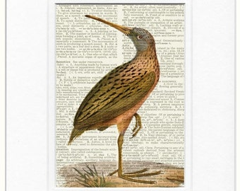 bird-1800's Madagascar Rail print