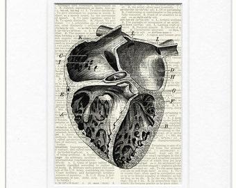 Vintage heart diagram print
