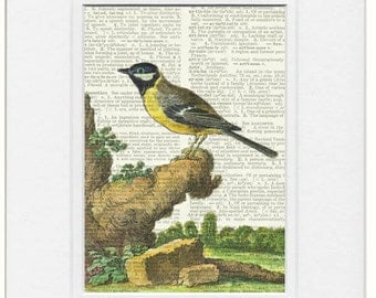 bird VI dictionary page print