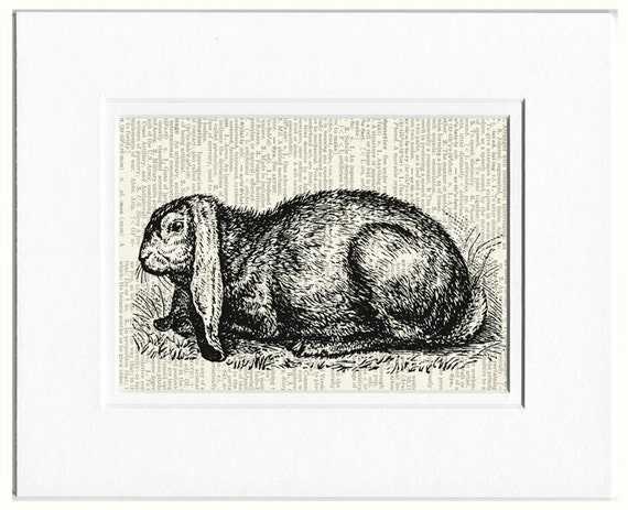 rabbit I dictionary page print