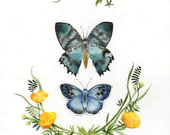 """naturalist art- nature, spring- """"Butterflies and Buttercups"""" - print"""