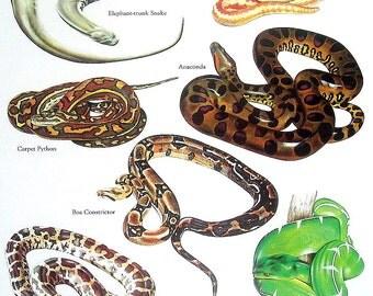 Snakes - Rubber Boa, Anaconda, Carpet Python, Boa Constrictor - Vintage 1980s Book Plate Page