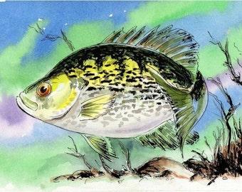 Original Fish Watercolor White Crappie