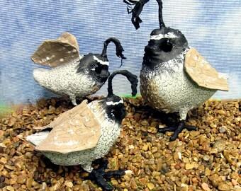 Primitive Quail, Primitive Bird, Quail Family, Covey,  Quail