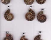 Fossil ammonite  tan beige brown Has silver Tone  Rim and Bail all set to go for Pendant Necklace
