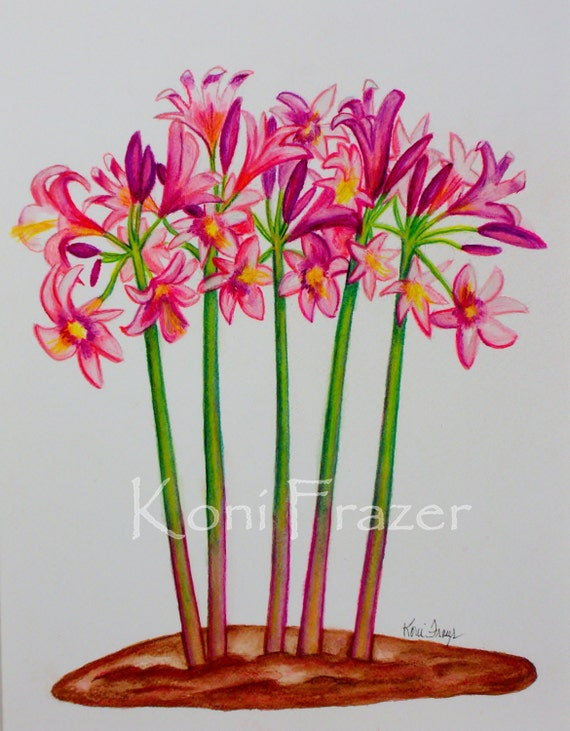 Pink flower art,  Pink Amaryllis-Belladonna, fun wall decor