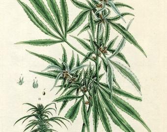 Digital Image Cannabis Hemp Green Brown Botanical Weed You Print Digital Image 300 DPI
