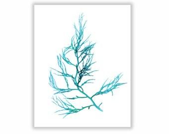 Seaweed Print Vibrant Teal Botanical Artwork, Ocean, Coastal Living, Beach, Wall Decor, Matted Print Teal