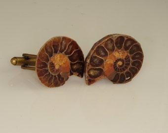 Ammonite Fossil Cuff Links Beautiful OOAK 27 mm   L-71