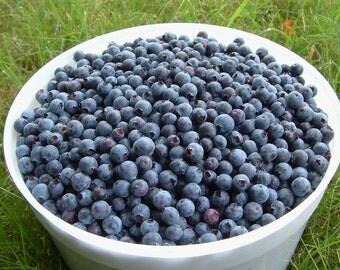 BODY SCRUB ~ Blueberry Body Scrub Sugar or Sea Salt Body Polish 8 oz Jar
