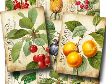 Antique Fruit Digital Collage Sheet Download and Print Paper Crafts Decoupage Original Whimsical Altered Art by GalleryCat CS5