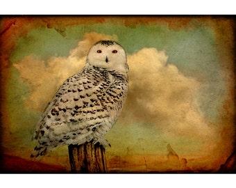 nature photography, animals, nature, owl, bird, Snowy owl, stormy, clouds, sepia, rustic, bird, bird lover 11x14