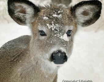 Popular Items For Deer Nursery Decor On Etsy