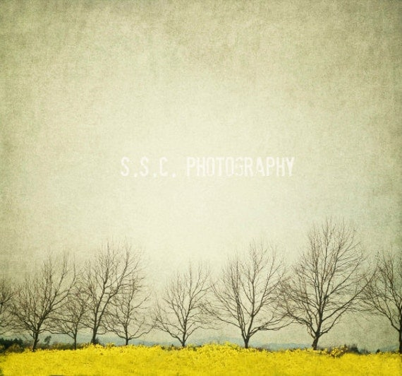 Vintage Landscape photography. Mustard field. by ...