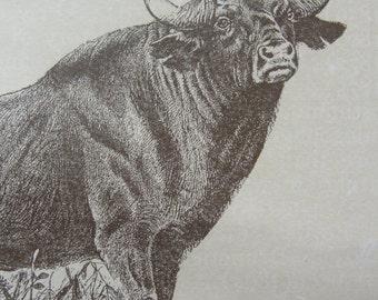Original vintage Gaur, Genet, Etc. 1911 encyclopedia page