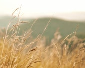 Nature Photography, Warm Orange Red Rust Rustic Mountains Wheat Field Art Print