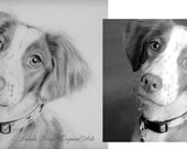 CUSTOM 5x7 PORTRAIT, Pet Portrait, Custom Drawing, Dog, Cat, Animal, Special Drawing, Birthday Gift, Family Pet, Christmas Gift, Small Gift