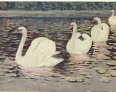 Antique Postcard Beautiful Swans Swimming on a Lake with Lily Pads - Pond - 1909