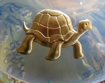 Tortoise Turtle Character (1 pc)