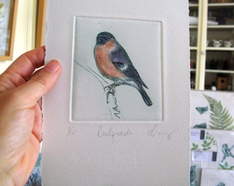 Bullfinch bird print. Limited addition hand printed drypoint.