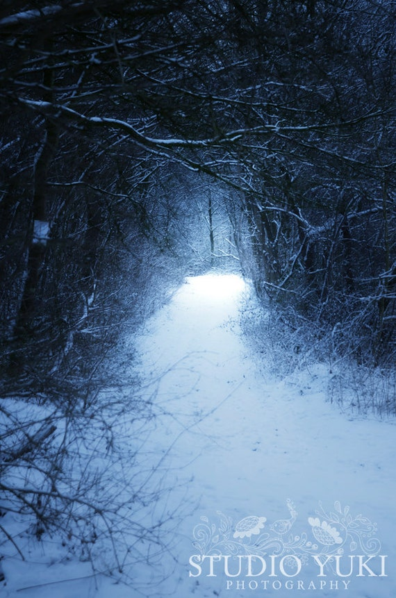 mysterious forest in winter - photo #30