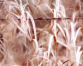 """Barbed Wire Fence and Autumn Grasses Fine Art Photography 9"""" X 12"""" Print, Old Country Fence"""