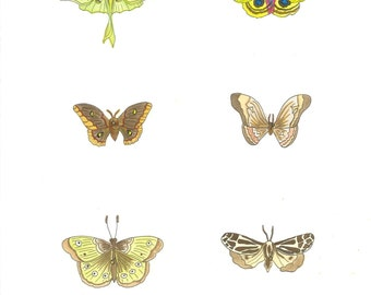 Moths - original ink and watercolor drawing, painting, illustration
