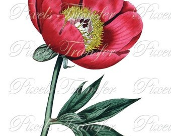 PEONY Instant Download Digital Image vintage flower wedding clipart red pink 247