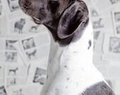Detroit, german short-haired,  white-brown, fine art dog prints,  home decor prints