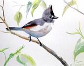 Black Crested Titmouse, original watercolor painting, 12 X 9in, birds art, bird lover