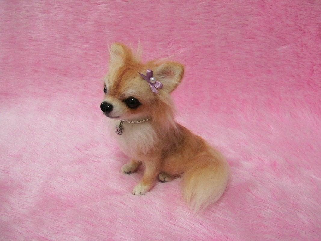 Long Hair Chihuahua Haircuts | hairstylegalleries.com