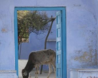 Blue Door India