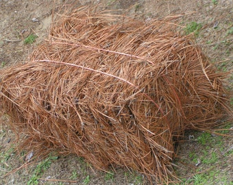 Premium Quality Longleaf Pine Straw Mulch, sold by the Bale