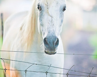 White Horse Decor - Equine Photography, Muted Colors, Pastel Colors, Mist, Wildlife, Ranch Animals, Western Print, Dreamy Horse Photo