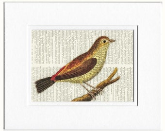 bird V dictionary page print