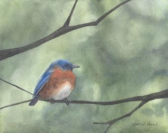Bluebird Watercolor Painting - Fine Art Archival Print- Signed Giclée- Limited Edition Bird Art by Laura D. Poss