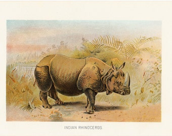 1901 Antique INDIAN RHINOCEROS fine engraving, original antique gorgeous print