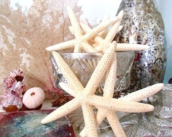"White Starfish, Beach Wedding Shells, Shell Coastal Decor, Bulk Starfish - White Finger Starfish 4""-5"", Set of 12"