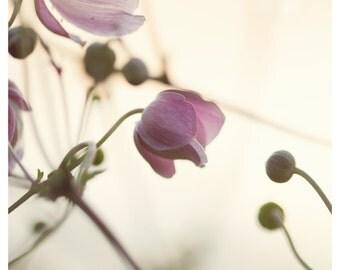 Digital download - flower pink bright soft photography botanical art decor nature macro wall art modern minimalist zen