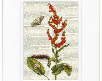 botanical no. 17 1600's print