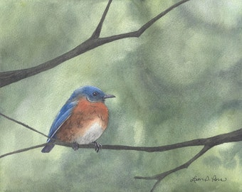 Eastern Bluebird Watercolor - Print from an Original Painting by Laura D. Poss - Two sizes - 5 x 7 inches and 8 x 10 inches- Bird Art
