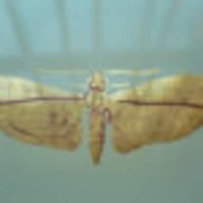 3dragonfly3