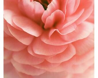 Home Decor - Gift For Mom - Flower Photograph - Nature Photography - Pink Print - Samba - Ranunculus Art - Fine Art Photograph - Oversized