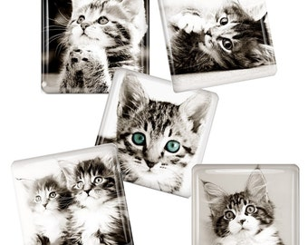 Cute and Cuddly Kitten Magnets - Black and White -  Glass Tile Magnet Set