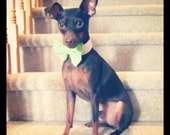 Dog or Cat Bow Tie: Green Checkered Gingham