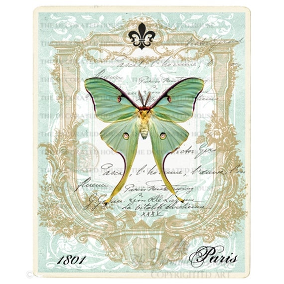 Butterfly Art Print. Luna Moth Vintage Style.  Blue Green Aqua 8x10 inches. The Decorated House on Etsy