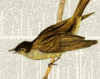 Pewee bird dictionary page print