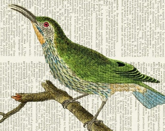 Bird Print I from 1700's, print