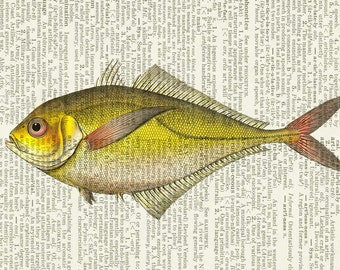 fish VIII dictionary page print