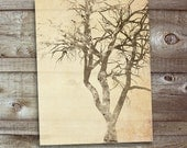 Tree (November) - Card set of 8